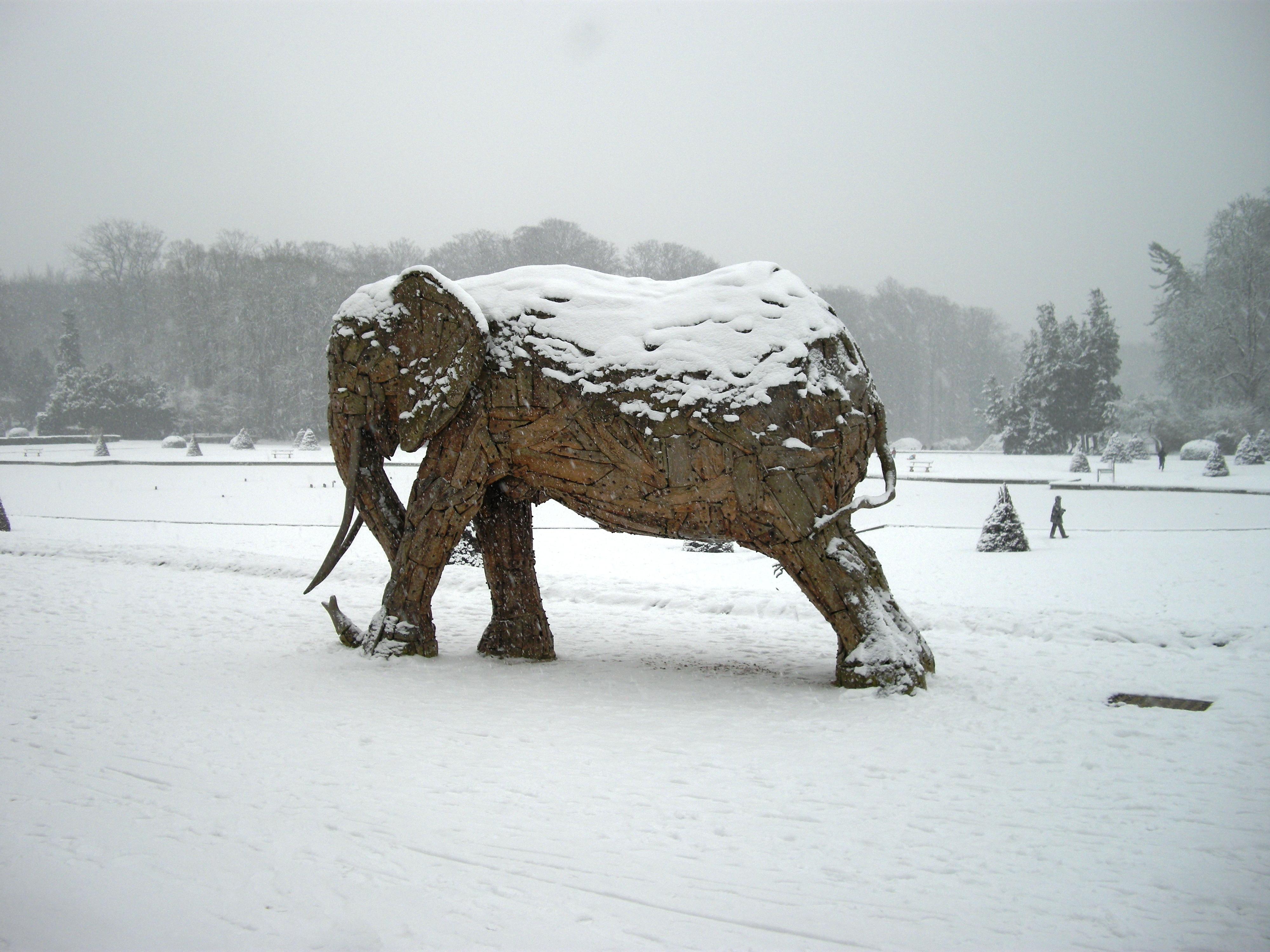 Elephants in Snow