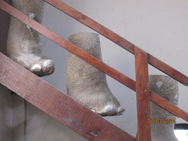 elephants feet 2